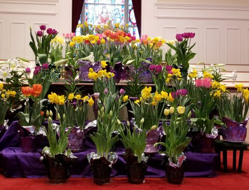 Order your Easter flowers now!